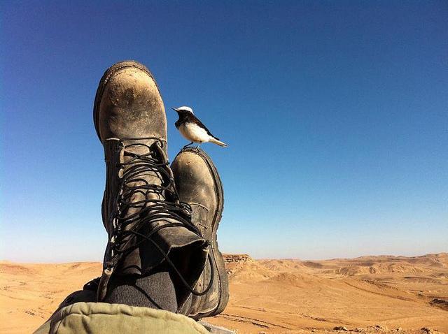 un-soldat-de-la-brigade-golani-prend-quelques-minutes-de-repos-une-photo-qui-permet-de-bien-faire-ressortir-ce-c3a0-quoi-peut-ressembler-une-journc3a9e-calme-dans-le-dc3a9sert