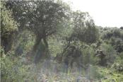 Les entraînement ont lieu dans un environnement densément boisé, semblable au paysage du Sud-Liban.